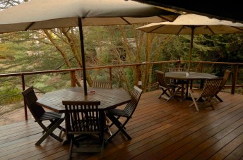 A quiet moment on the deck at Wildebeest.