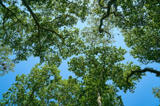 Looking up to the blue sky from underneath lush green trees