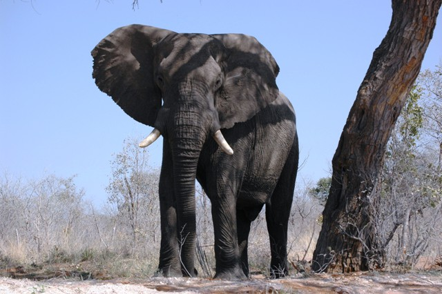 Wildlife sighted along my drive to Kasane, Botswana