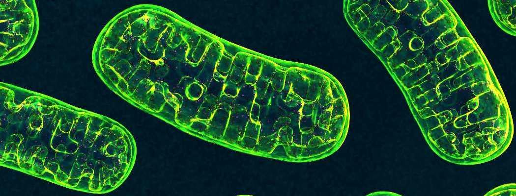 Riusciamo a modificare il DNA dei mitocondri