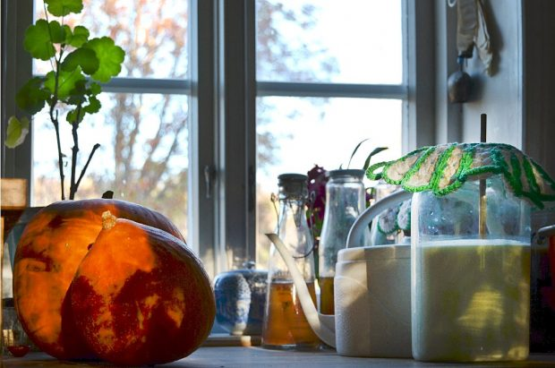 Pumpkins_kefir_and_kombucha lowres
