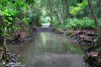 Road or stream, or both? Waipio Valley