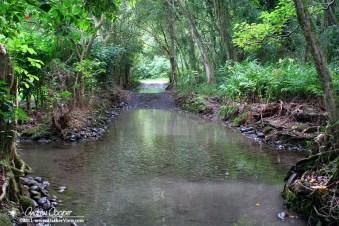 Road or stream, or both? Waipio Valley