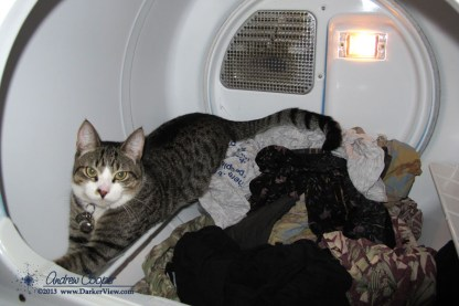 Ras in the Dryer