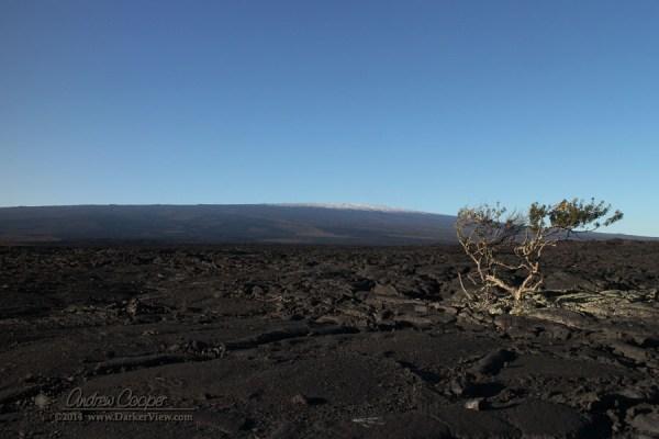 Snowy Mauna Loa