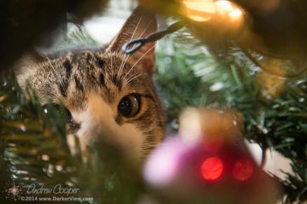 Ornament Temptation