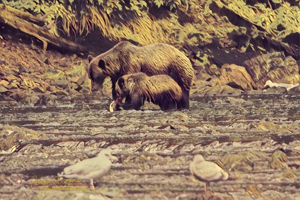 A mother grizzly bear teaching a cub how to fish at Pavlof Harbor