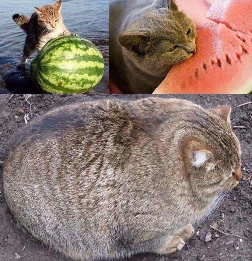 a thrilling saga cat watermelon