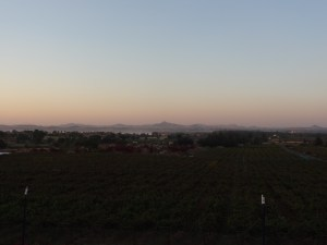 View over Sula Vineyards