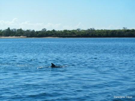 Wasini Island dolphin