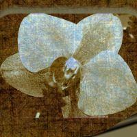 Flower-gram 1