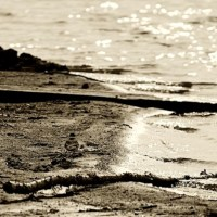 Shoreline in Monochrome