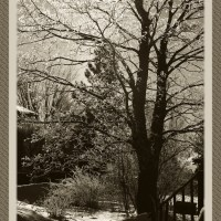 January Hoar Frost : Antique Impressions