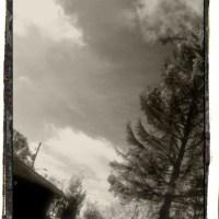 Dying Tree : Monochrome Memory