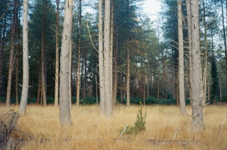 New Forest, 35mm