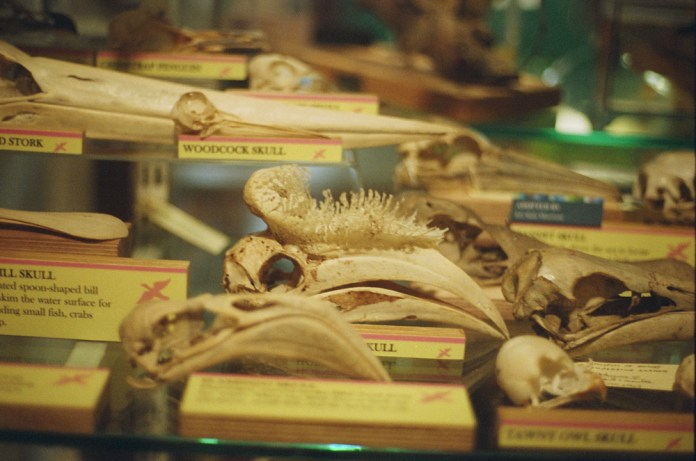 Grant Museum of Zoology, London