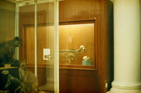 Hunterian Zoology Museum, Glasgow