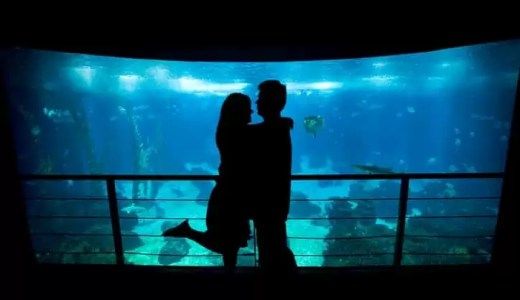 【2019】街コンで水族館に行く男性向け|押さえるポイント9つ
