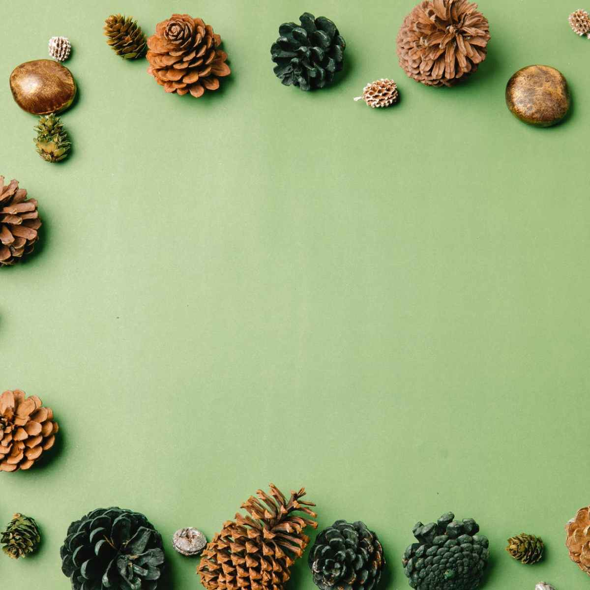 various natural pine cones on green background