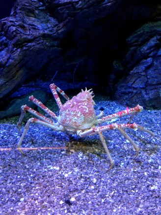 More crab.