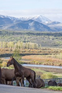 Research the new book series at Wyoming guest ranch