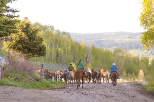 Western Guest Ranch near Jackson Hole and Yellowstone
