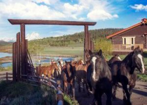 view of horses and Grand Tetons, at a Western Guest Ranch near Jackson Hole and Yellowstone