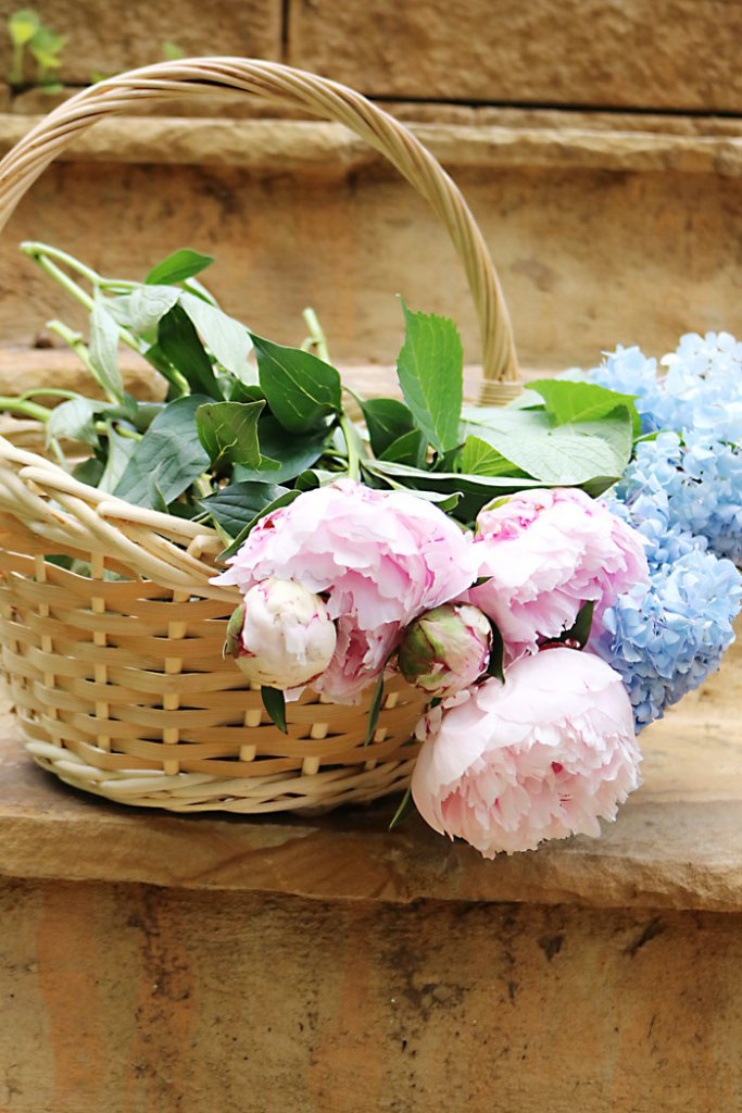 basket-of-peonies