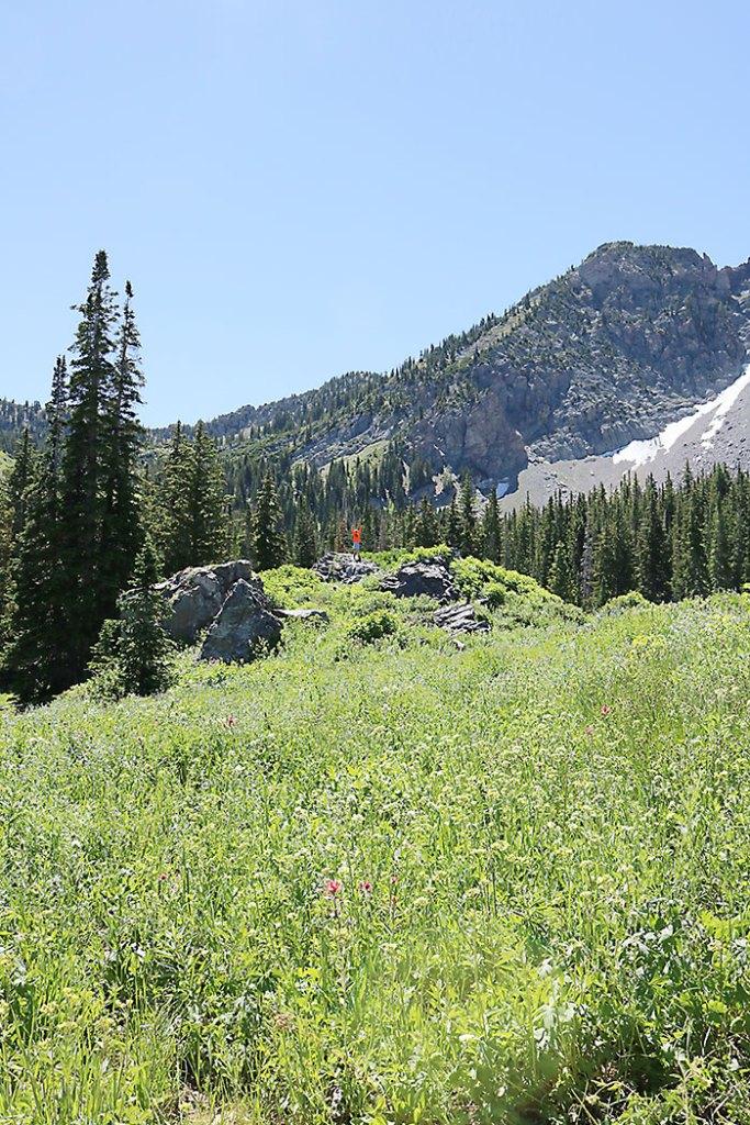 albion-basin-hiking-around-utah
