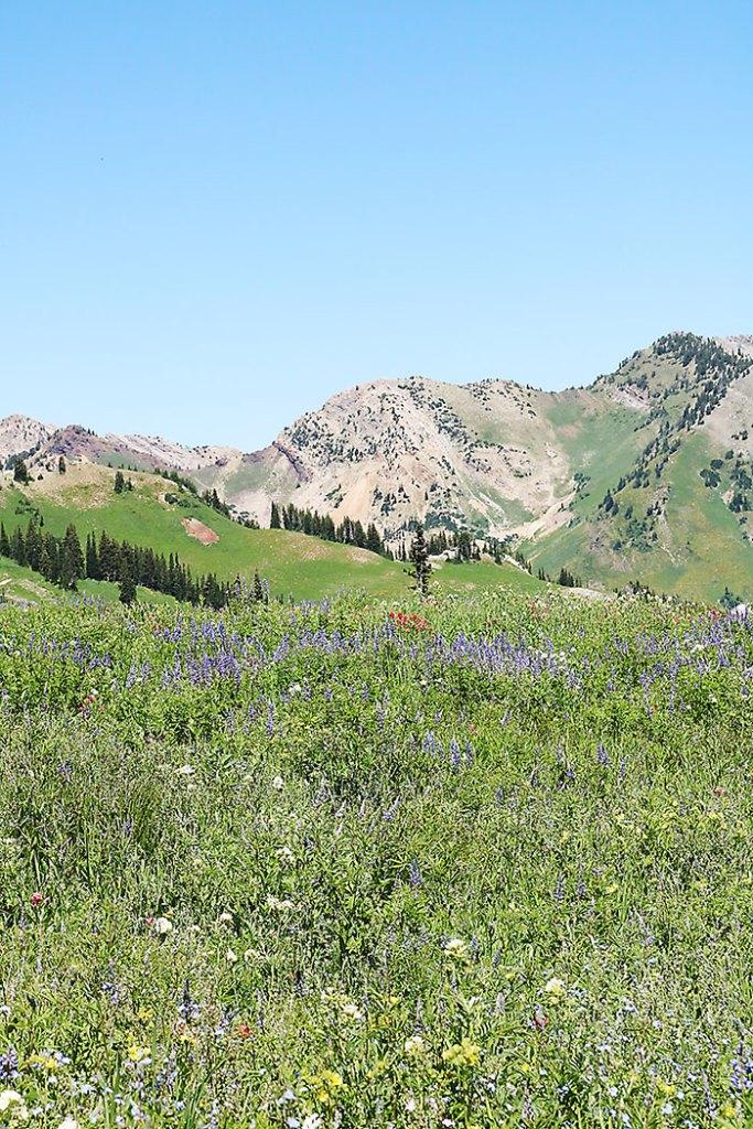 albion-basin-utah-hiking