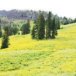 Summer Travel to Yellowstone