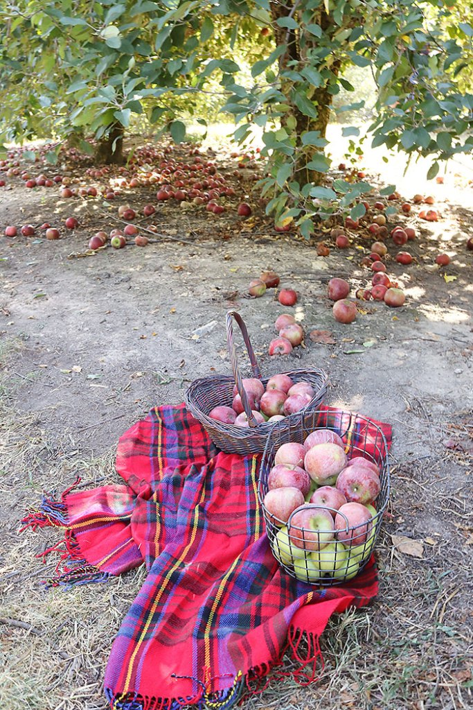 fall-to-do-list-apple-basket, apple picking, apple picking baskets, apple orchards, fall activities, plaid scarf, fall decorations