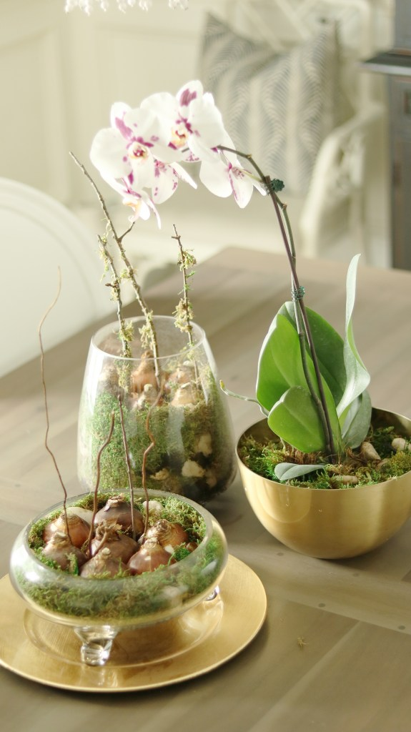 Planting bulbs in indoor containers is an easy way to decorate for fall with organic natural textures but also can be enjoy through the holiday months ahead.  Forcing bulbs in containers is easy and a beautiful natural centerpiece for a dining room table or end table or entry way table.  Add texture with replanting orchids.  || Darling Darleen #darlingdarleen