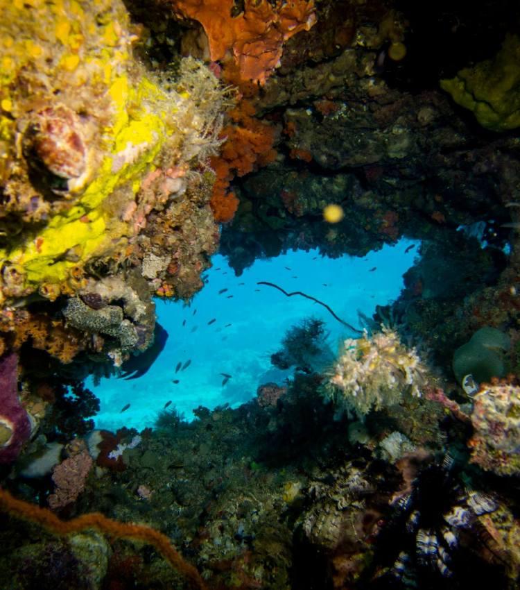 raja ampat dive sites