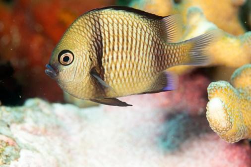 Coral fish by Erika Antoniazzo