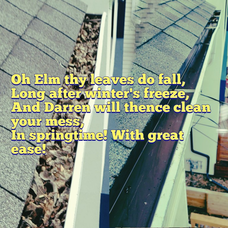 elm trees cause gutter cleaning