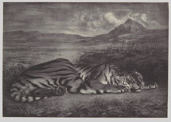 Working Title/Artist: Royal Tiger Department: Drawings & Prints Culture/Period/Location: HB/TOA Date Code: Working Date: 1829 mma digital photo #DP106347
