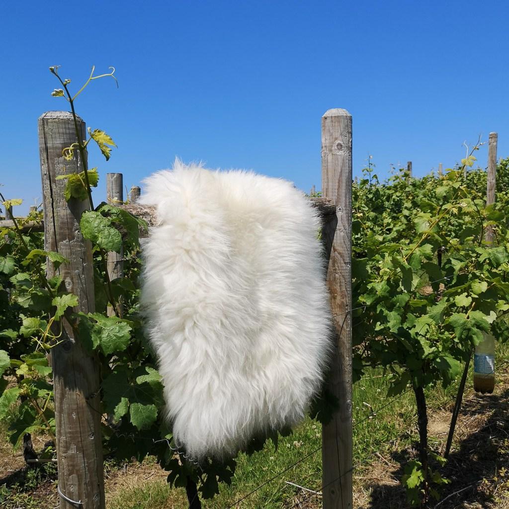 vine-sheepskins