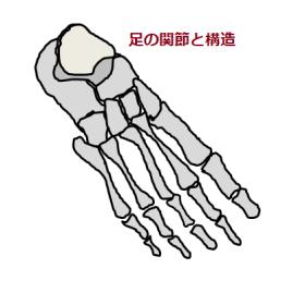 足の関節の図
