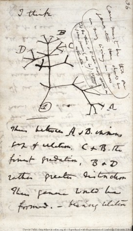 Darwin's initial sketch of the tree of life