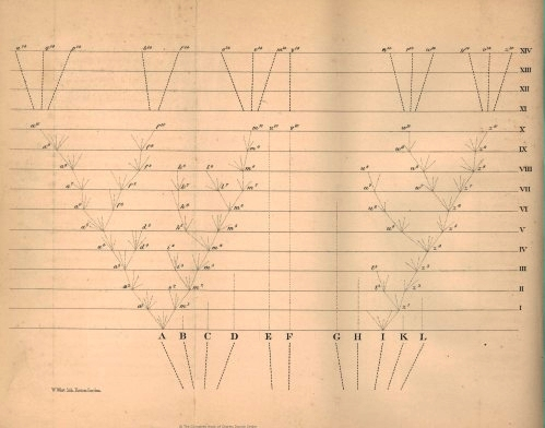 The only illustration in Darwin's Origin of Species: a tree diagram showing branching evolution