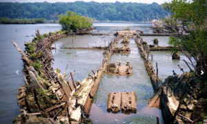 You can check out wooden shipwrecks from WWI at the new marine sanctuary in the Potomac River.