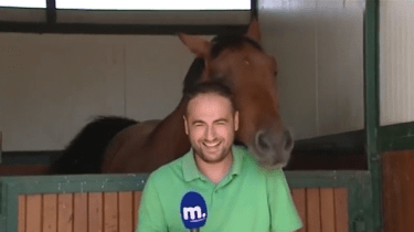A funny horse insists on teasing and nudging a reporter for Makedonia TV as he tries to shoot a stand up. Instead, he just gets a bunch of bloopers and giggles.