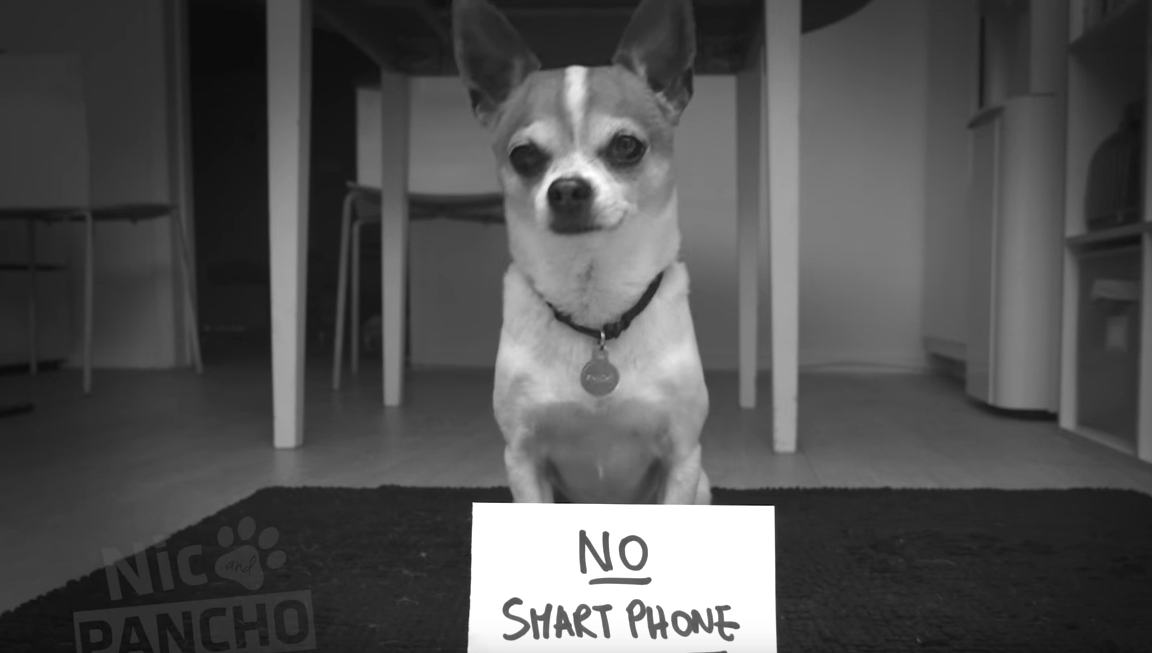 What Happens When Dog Asks for Phone-Free Vacation