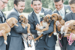 Even the groomsmen got into the rescue puppy spirit at the wedding of dog lovers Sarah Mallouk and Matt Crain.