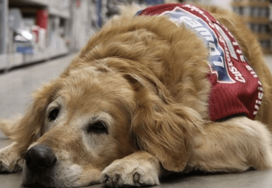 Veteran Can't Go To Work Without His Service Dog, So Lowe's Hires Them Both
