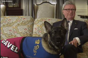 The future looked bleak when Gavel the super friendly puppy flunked out of the police academy in Australia. The governor has stepped in with a new job.