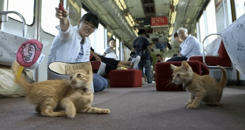 All Aboard The Cat Train As Japan Gives A Ride To Some Adorable Strays
