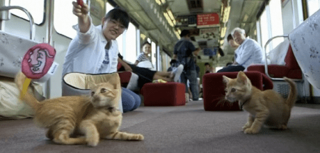 30 felines on board the cat train in Japan bringing awareness to stray cats.