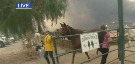KCBS reporter Kristine Lazar and photographer Marvin Stone interrupt a live shot to help save horses during Southern California wildfires.